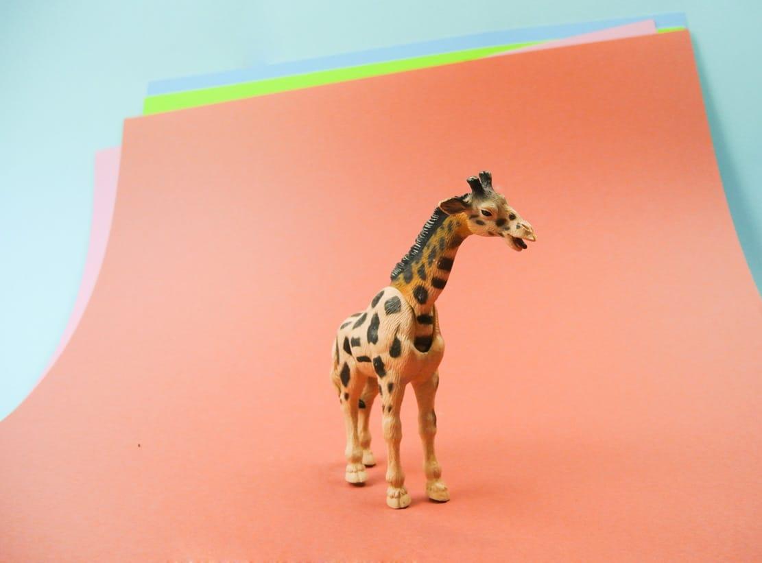giraffe fotografie studio